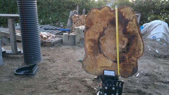 Pölkky takaa. Keskellä on iso laho kohta. Siinäkin halkaisukone on hyvä, se halkoo rauhallisesti pehmeänkin puun. Jos löisi kirveellä, se menisi pieniksi tikuiksi, joita on työläs poltella.