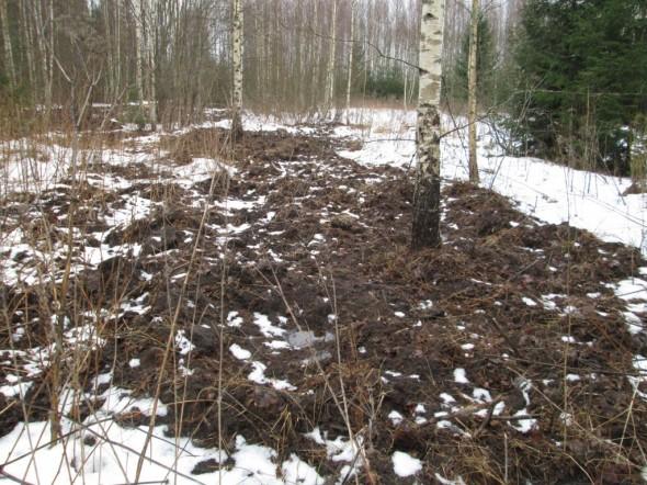Entistä peltoa, jossa metsäsika oli tehnyt kovasti hommia. Kai se sika sitten jäätyneestä maasta jotain syötävää löytää? Tai mitä sitten hakeekin.