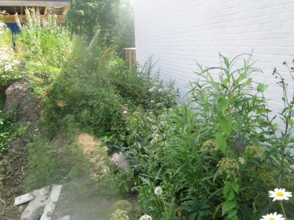 Hyvin kasvaa rikkaruohoa multakasa (joka levitetään näillä näkymin vasta ensi kesänä).