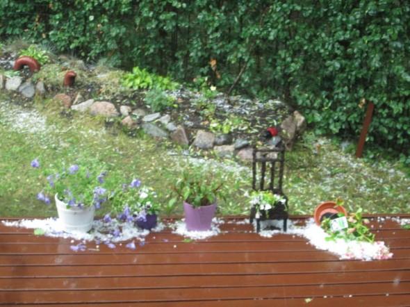 Sateen jälkeen rakeita puutarhassa.