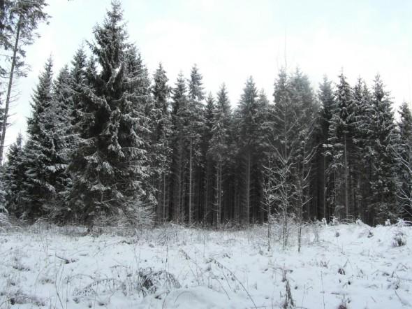 Hakkuuaukeaa omassa metsässä. Pois hakatuista puista on nyt rakennettu meille talo. Jonkin verran tarvitaan vielä sahatavaraa lisää, joten hommat jatkuu ja aukko suurenee jossain vaiheessa.