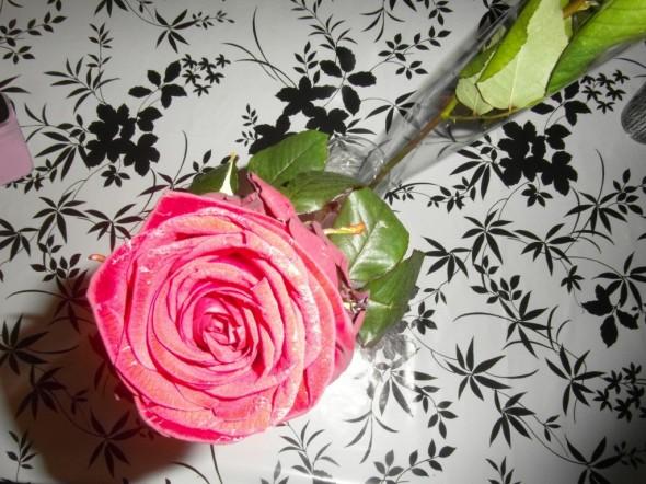 Naistenpäivän ruusu salamavalon loisteessa, salama vähän vaalentaa ruusun punaisuutta.