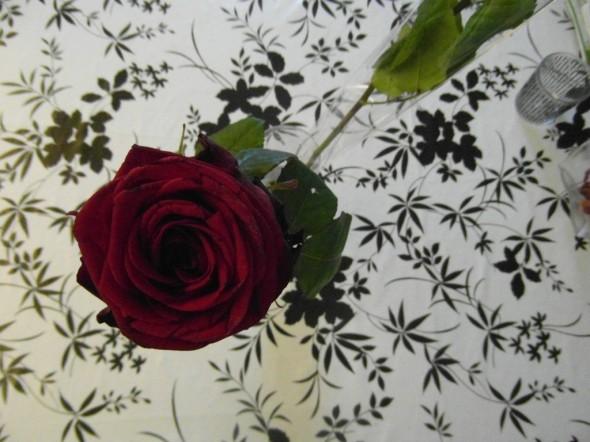 Oikeasti kyseessä on siis tummanpunainen ruusu, joka ilman salamaa näyttää tältä. Vieressä vinottain näkyvä toinen ruusu on vielä kukkakaupan muovitaskussa, koska meidän perheen tytär eli Monika on vielä kaverinsa luona yökyläilemässä, eikä ole vielä omaa ruusuaan saanut.