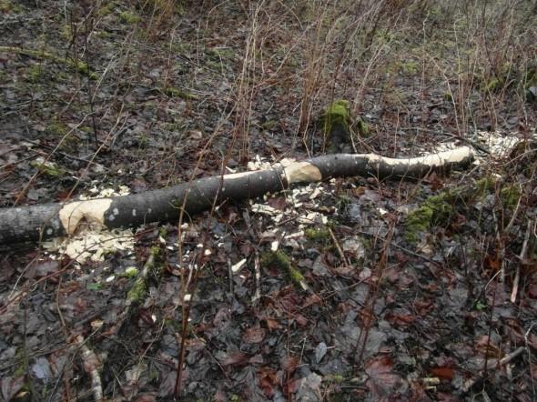 Ennen rakennustyömaalle vientiä puutavara pitää katkoa tarvittuun määrämittaan.